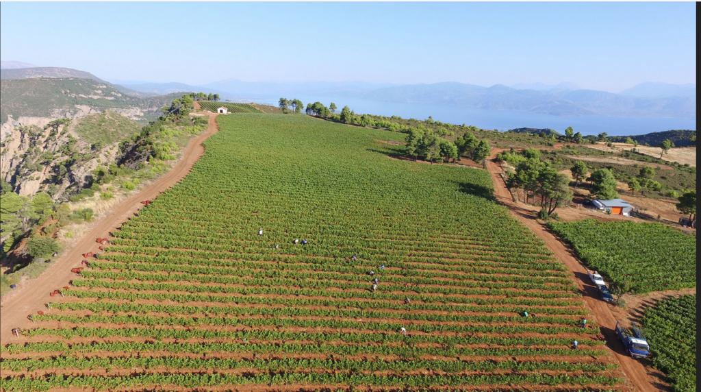 Vignobles vins Anthos en Grèce