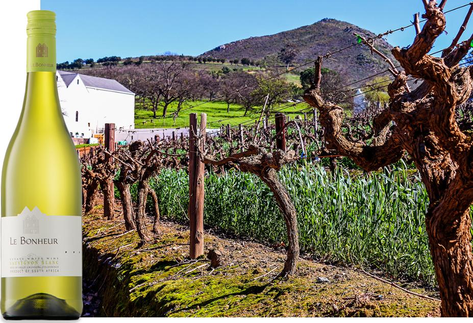 Vignoble Le Bonheur un des plus vieux de Stellenbosch