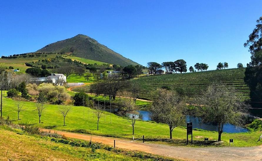 Vignoble Le Bonheur Stellenbosch