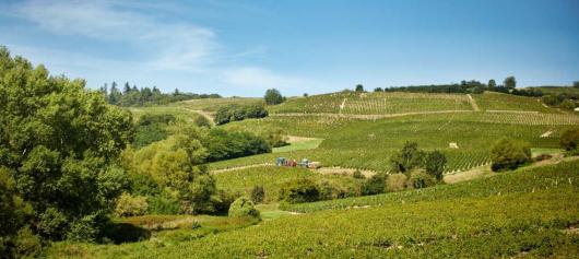 Vignobles Hospices de Belleville Cru du Beaujolais Fleurie
