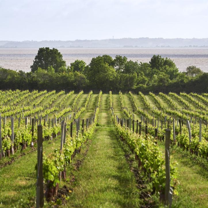 Vignobles Château Loudenne avec l'estuaire en arrière-plan