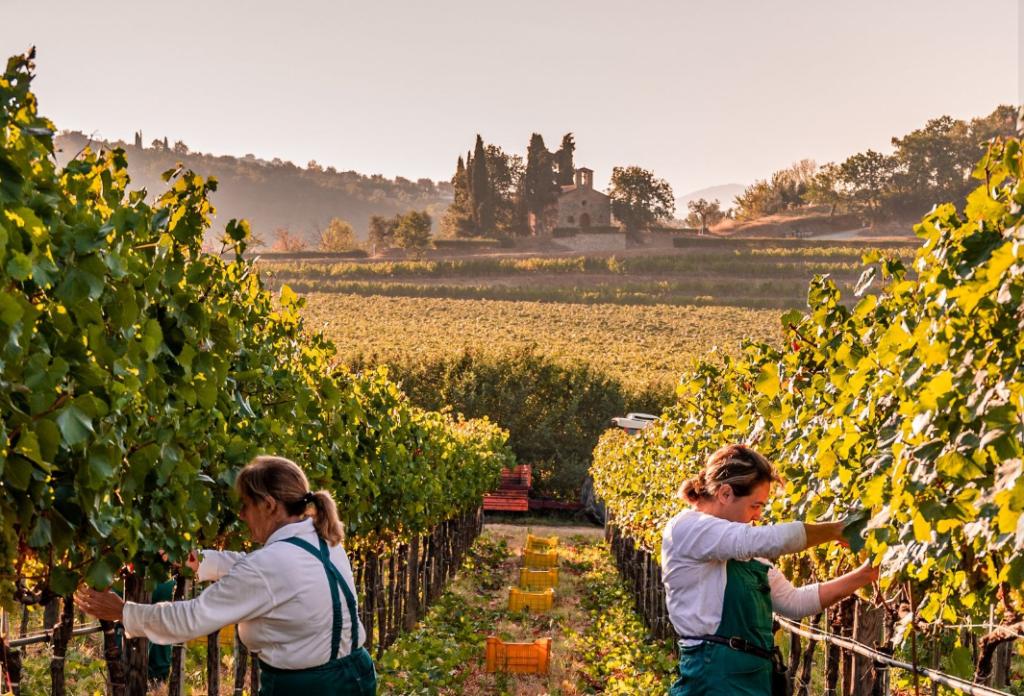Vignobles Marchesi Antinori