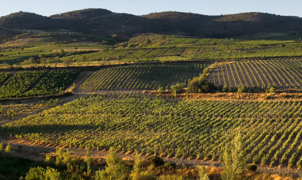 Vignobles Les Maîtres Vignerons de Cascastel