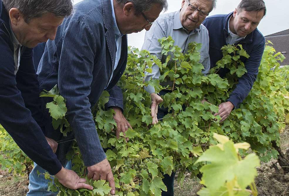 Famille Bourgeois dans le vignoble