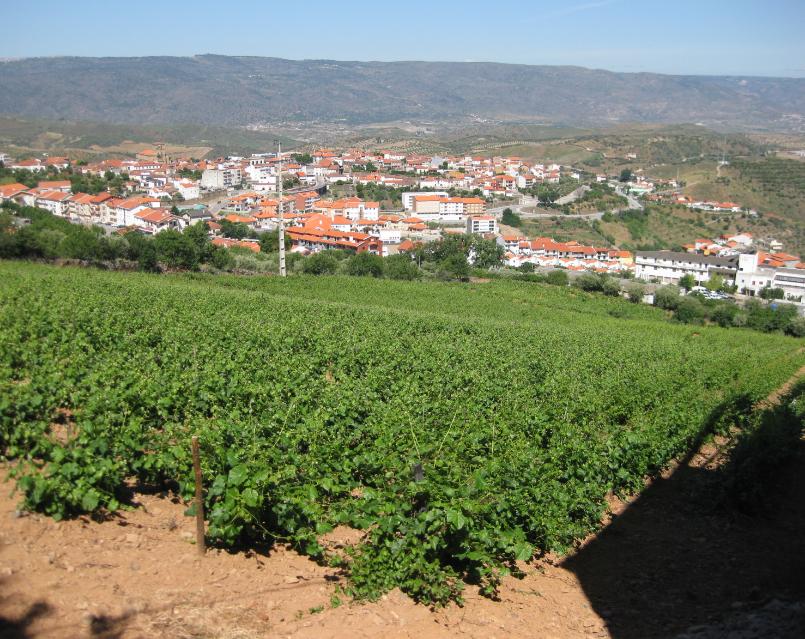 Vignobles Quinta do Vale da Perdiz