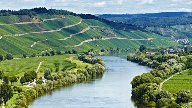 Vignobles de Moselland Allemagne Pfalz