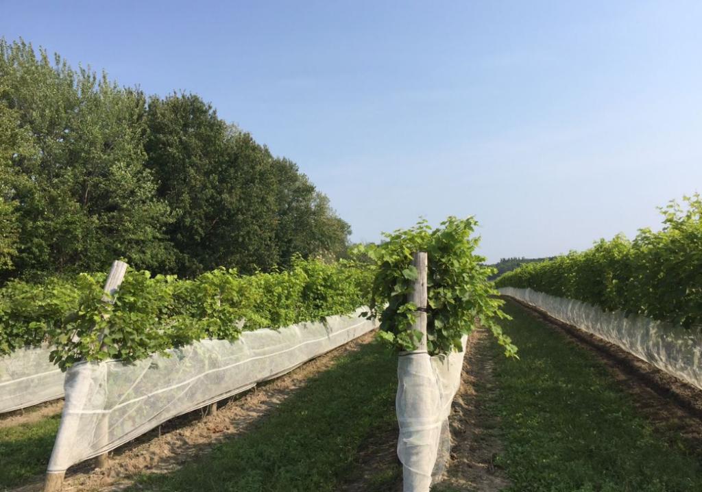 Vignobles Château Taillefer Lafon