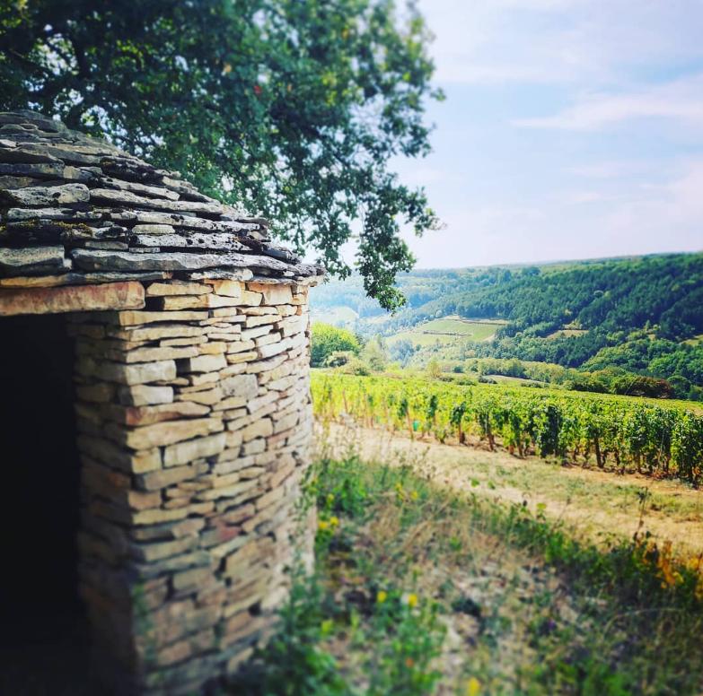 Cabotte de vigneron - vignobles Moillard avec vignobles en arrière-plan