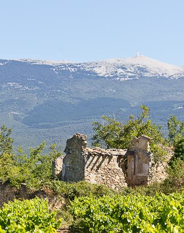 Vignoble Pesquié avec le mont Ventoux en arrière-plan