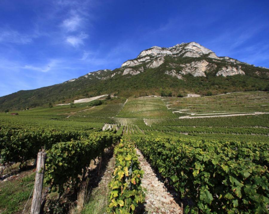 Vignoble Jean Perrier & Fils, Savoie, Apremont