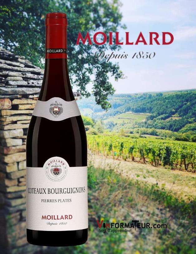 Bouteille de Moillard, Côteaux Bourguignons, Pierres Plates, 2019 avec vignobles en arrière-plan