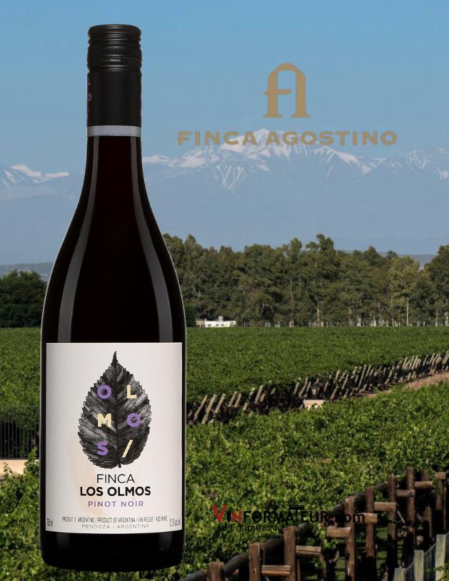 Bouteille de Finca Los Olmos, Pinot Noir, Argentine, Mendoza, Finca Agostino, 2018 avec vignoble en arrière-plan