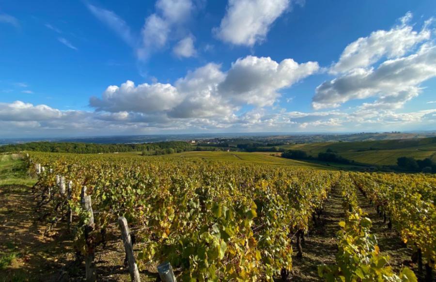 Vignoble du Domaine Manciat Poncet