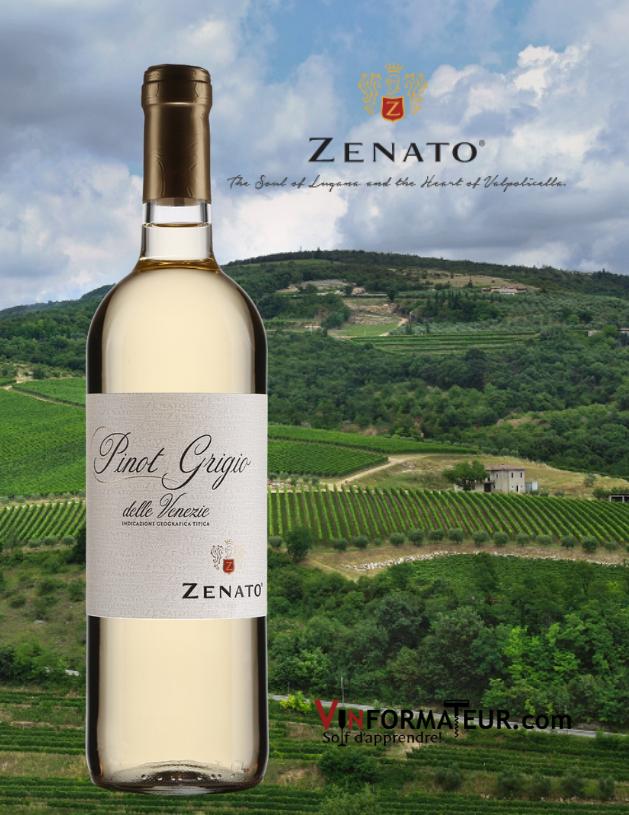 Bouteille de Zenato, Pinot Grigio, Italie, Vénétie, Pinot Grigio delle Venezie, Zenato Azienda Vitivinicola, 2020 avec vignoble en arrière-plan