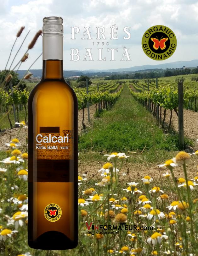 Bouteille de Calcari, Parés Baltà, Espagne, Penedès, vin blanc bio, 2019 avec vignobles en arrière-plan