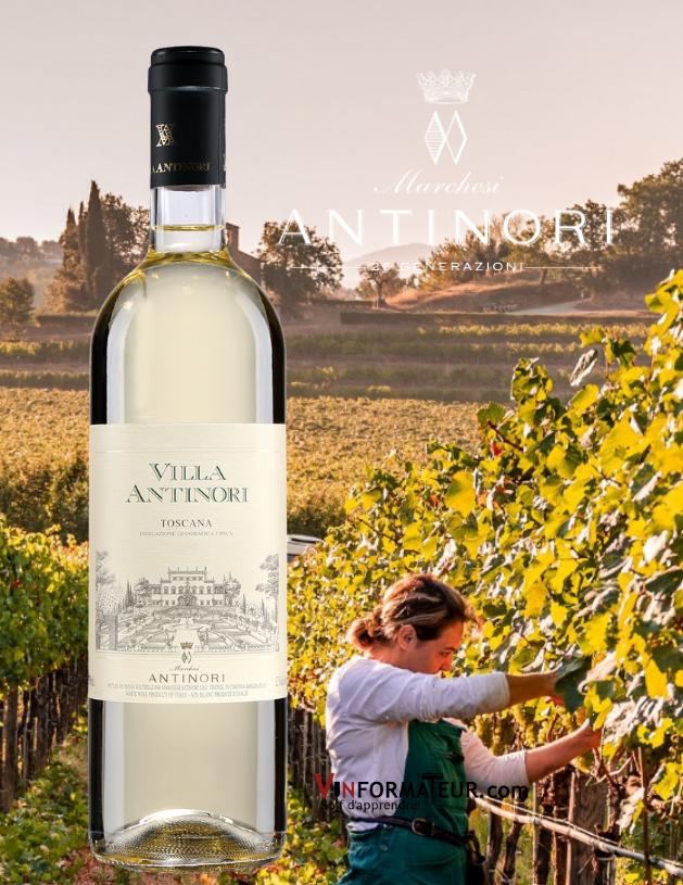 Bouteille de Villa Antinori, Bianco, Toscana, Italie, Marchesi Antinori, 2019 avec vignoble en arrière-plan