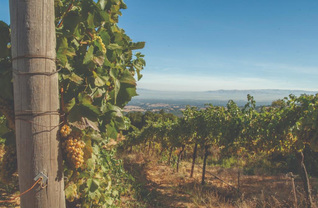 Vignoble de Californie