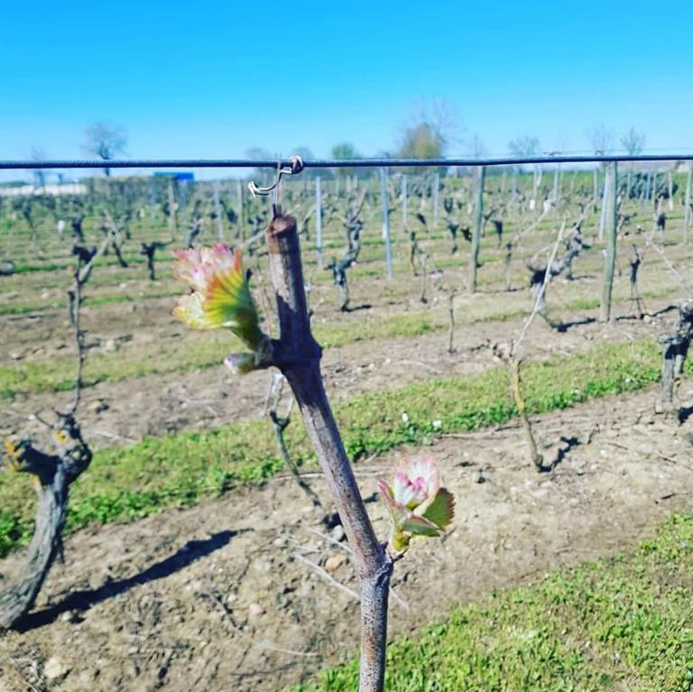Vignoble du Domaine de la Guilloterie