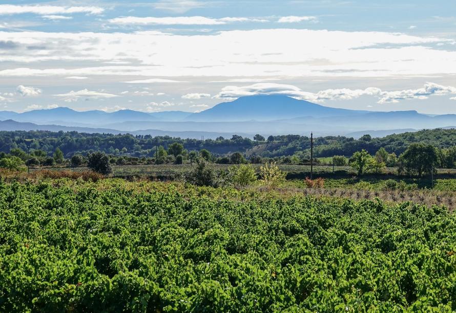 Vignoble du Domaine Lafond Roc-Épine