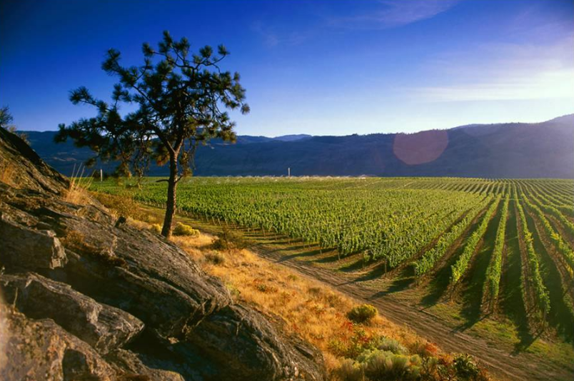 Vignobles de Black Sage Vineyards