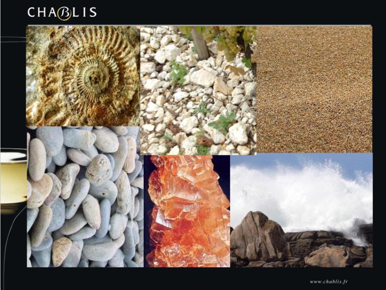Présentation Chablis - composition des sols - BIVB