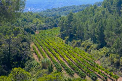 Vignobles Parés Baltà