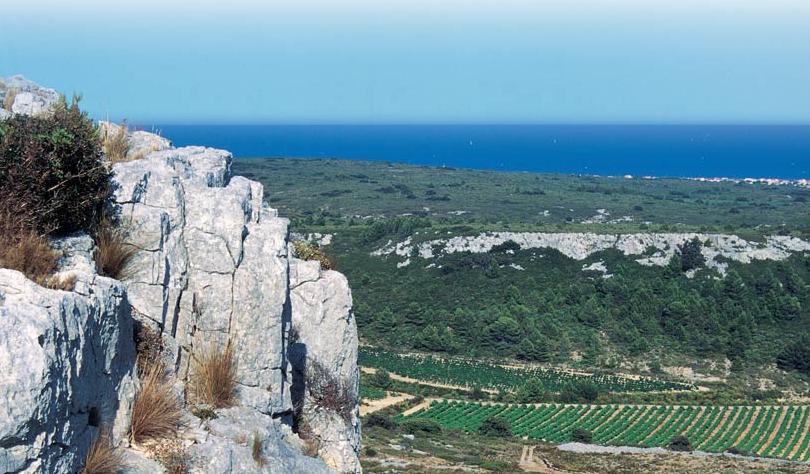 Vignobles Château Rouquette sur Mer