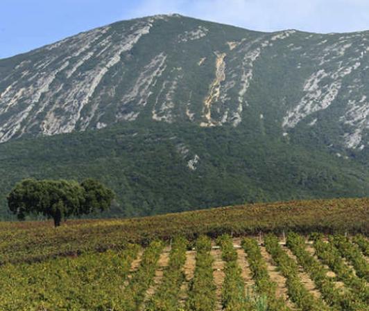 Vignobles de la Péninsule de Setubal