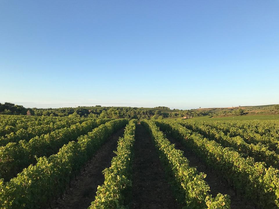 Vignobles Laurent Miquel
