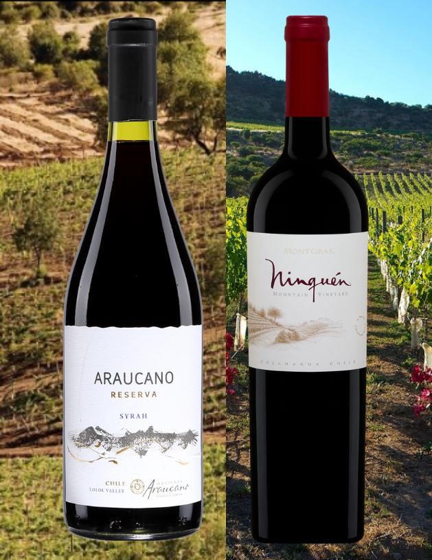 Bouteilles de Araucano, Syrah Reserva, Chili, Valle Central et le Ninquen, Chili, Valle Central, Villa Montgras 2018 abvec vignobles en arrière-plan