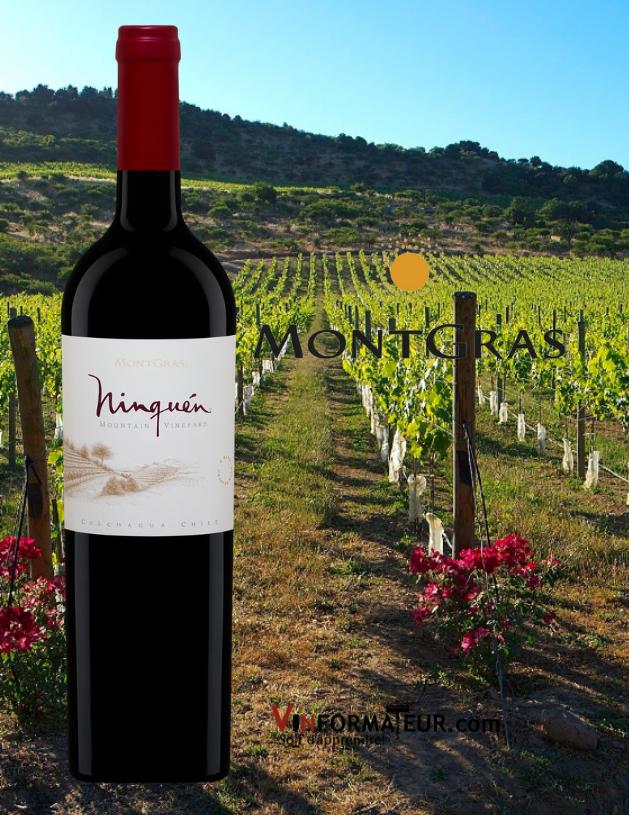 Bouteilles de Ninquen, Chili, Valle Central, Villa Montgras, vin rouge, 2018 avec vignobles en arrière-plan
