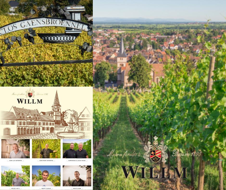 Maison Willm 6 vignerons, clos Gaensbroennel Vignobles Chai
