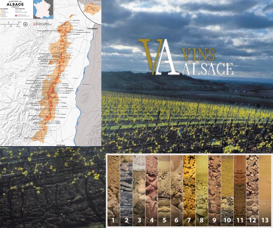 Vins d'Alsace carte viticole sols et terroirs d'Alsace