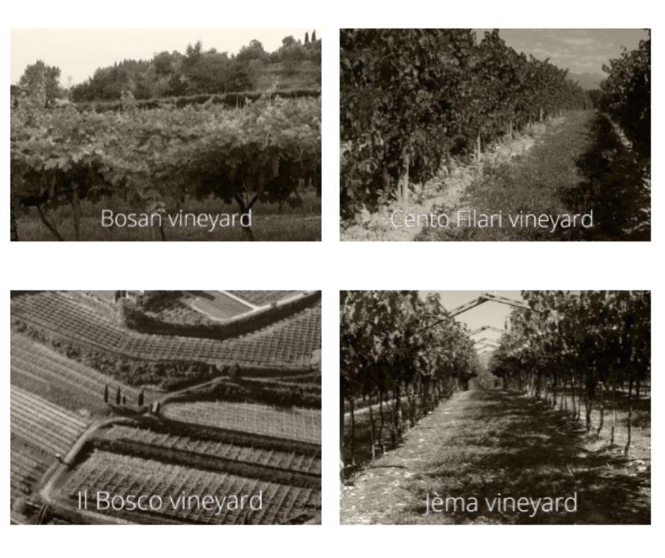 Quatre vignobles de la maison Cesari