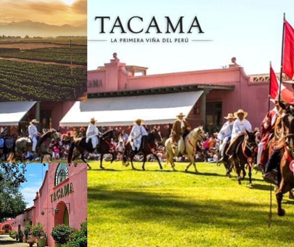 Vina Tacama chai, vignobles