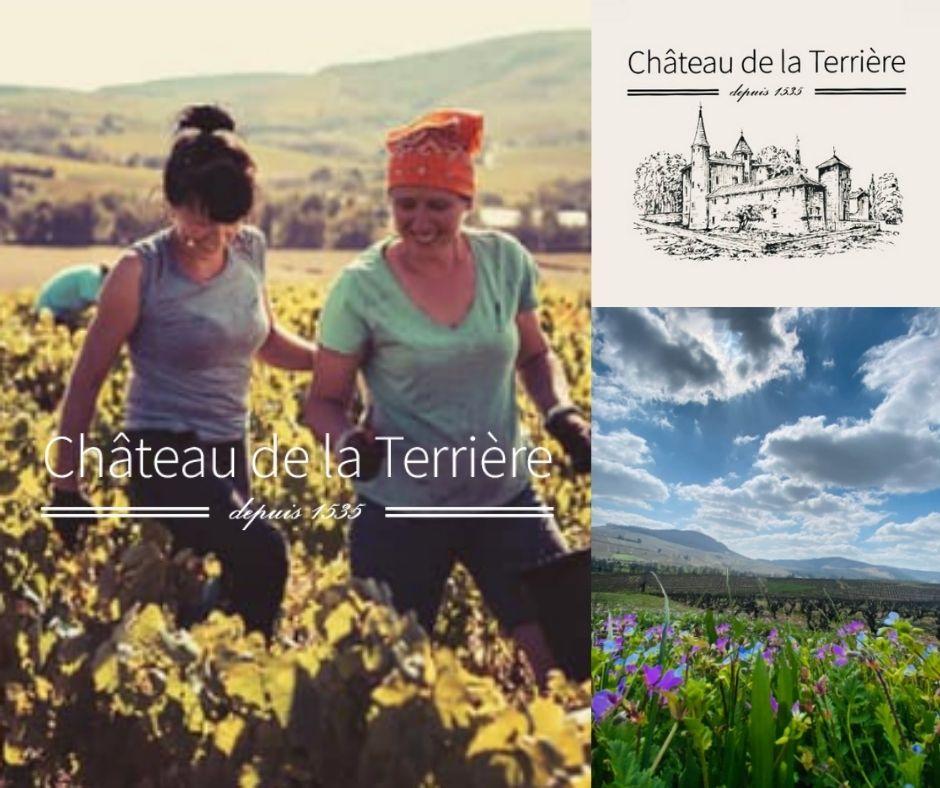 Château de la Terrière, château, vignobles