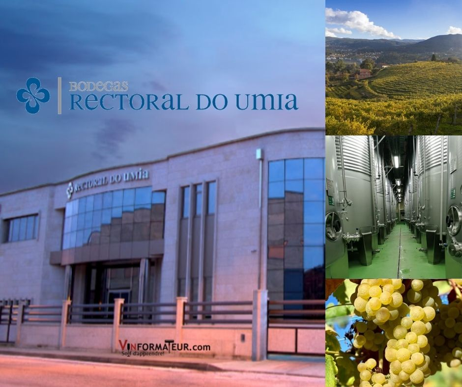 Rectoral do Umia, bureaux, chai, vignobles et cépage Albarino