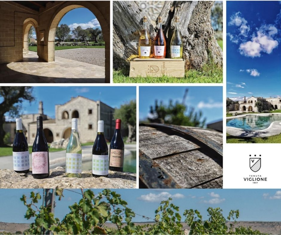 Tenuta Viglione, vins, chai, vignobles