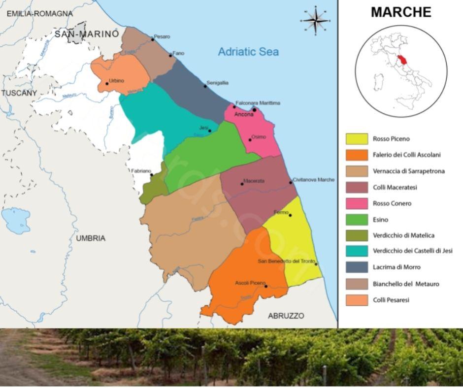 Carte viticole des Marches