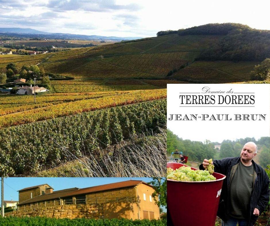 Domaine Terres Dorées, Jean-Paul Brun, chai, vignobles