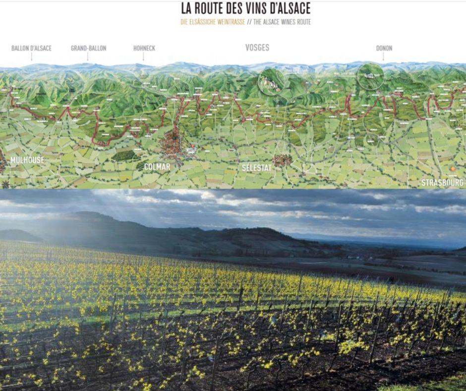 Route des vins d'Alsace et vignobles