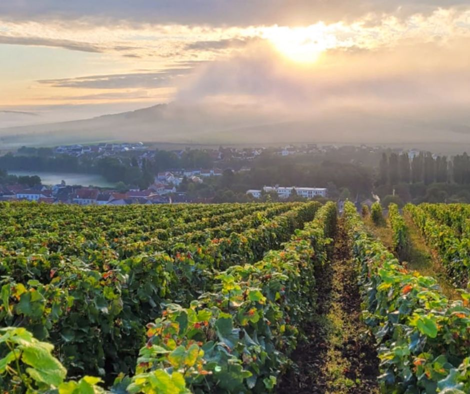 Vignobles Champagne Bollinger