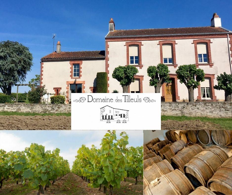 Domaine des Tilleuls, chai et vignobles