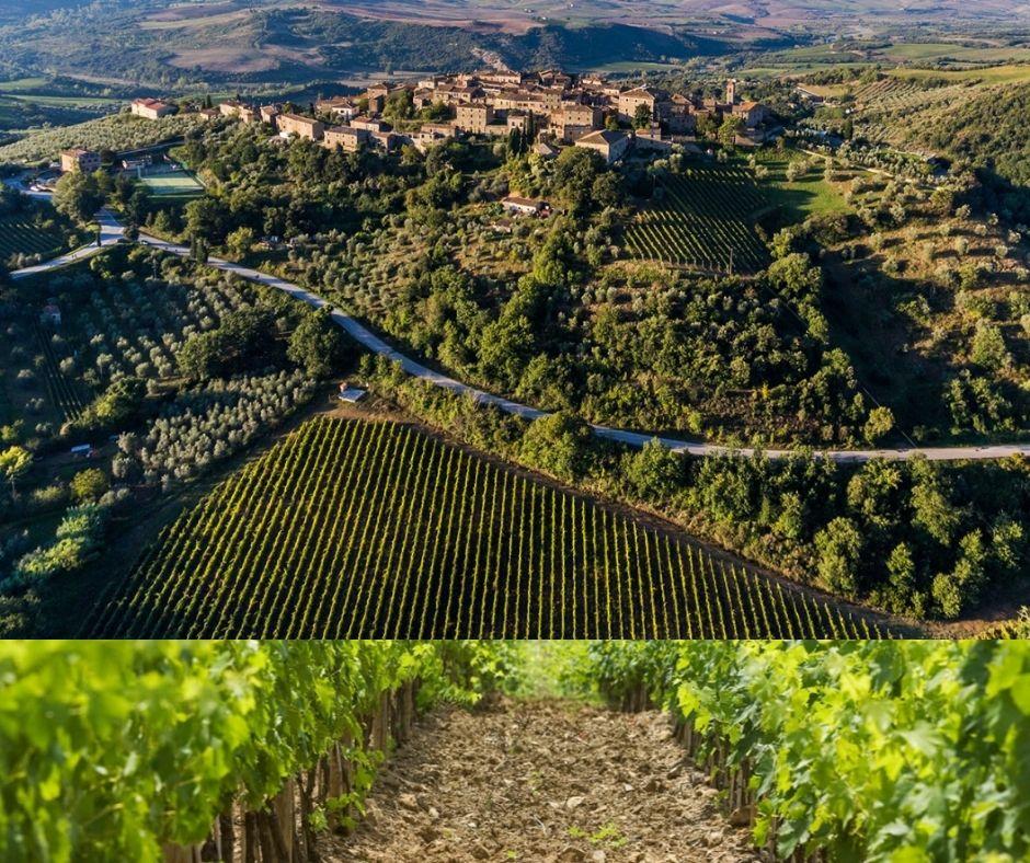 Village de Montalcino et vignobles
