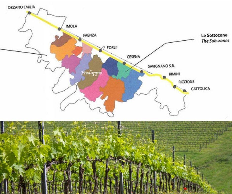 Carte viticole Predappio